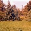prvotna-bakla-v-vrtu-postavljena-sredi-60-let_