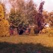 vrt-razvoj-od-60-naprej-3