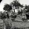 vrt-razvoj-od-60-naprej-18
